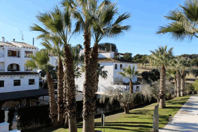 itsh 1522066085QGDZPF ref 1714 mobile 10 Communal pool views Villamartin Plaza